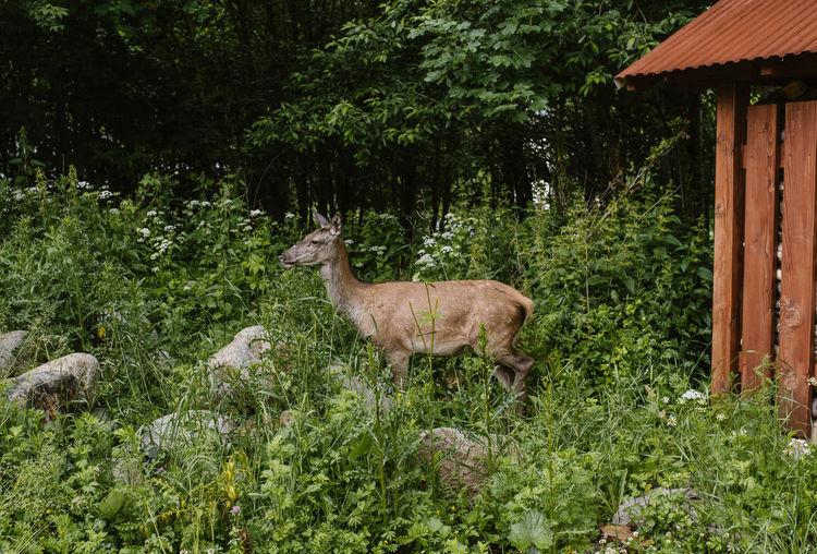 Deer standing amidst plants