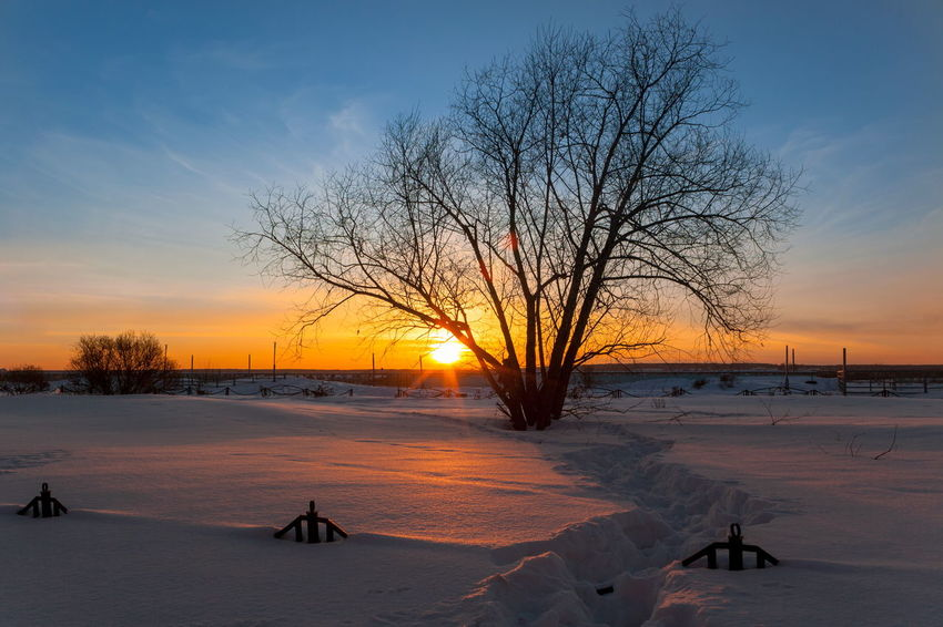 Bare Tree Beauty In Nature Bleak Cold Cold Temperature Day Frozen Landscape Nature No People Outdoors Scenics Sky Snow Sunset Tranquil Scene Tranquility Tree Weather Winter
