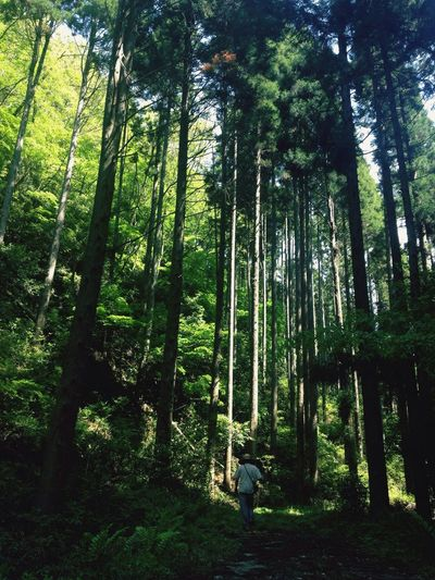 Forest Tree Nature WoodLand Tranquil Scene Tree Trunk Beauty In Nature Tranquility Day Outdoors Scenics Green Color Full Length Standing Adventure Landscape One Person People