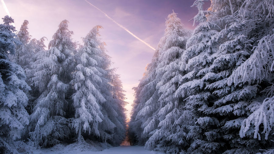 EyeEmNewHere Beauty In Nature Cold Temperature Day Nature No People Outdoors Scenics Sky Snow Sunset Tranquil Scene Tranquility Tree Winter