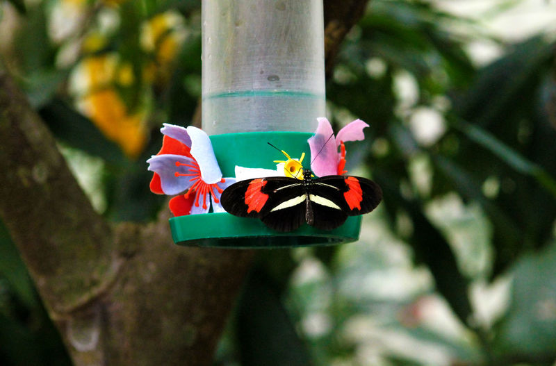Close-up of butterfly on bird feeder