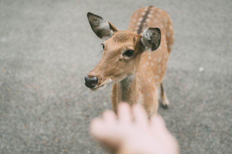 Cropped hand gesturing towards deer on land