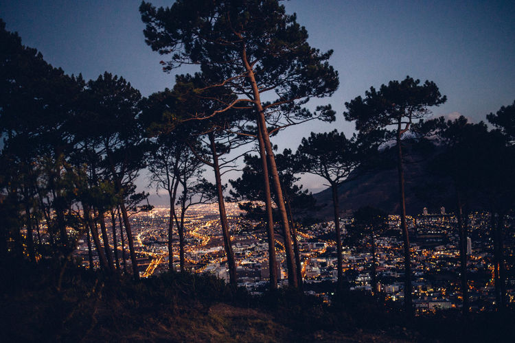 Illuminated cityscape seen through trees during dusk