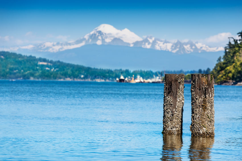 Barnacle encrusted pilings in Anacortes, Washington, ferry terminal with Mount Baker in the background Anacortes Barnacles Harbor Pacific Northwest  Reflection Sunny View Washington Blue Cascades Day Dock Mount Baker Mountain Mountain Range Ocean Posts Sea Sky Snow Summer Waterfront