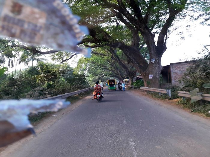 People on road amidst trees in city