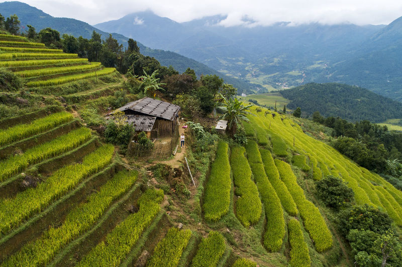 Mountain Scenics - Nature Landscape Rural Scene Agriculture Beauty In Nature Environment Field Built Structure Green Color Land Building Exterior Architecture Growth Nature Tranquility Mountain Range Tranquil Scene Farm Crop  No People Outdoors Plantation Terraces