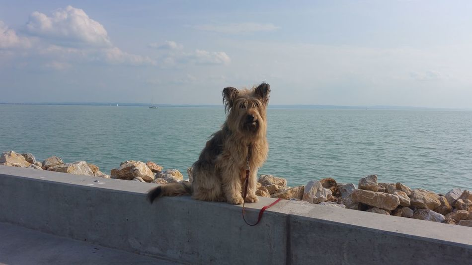 Animal One Animal No People Outdoors Nature Animal Themes Pets Dog Walking Dog Life Dog❤ Dog Portrait