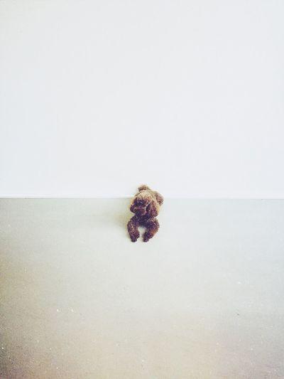 Minimalist. Cute Pets Dog Minimalism
