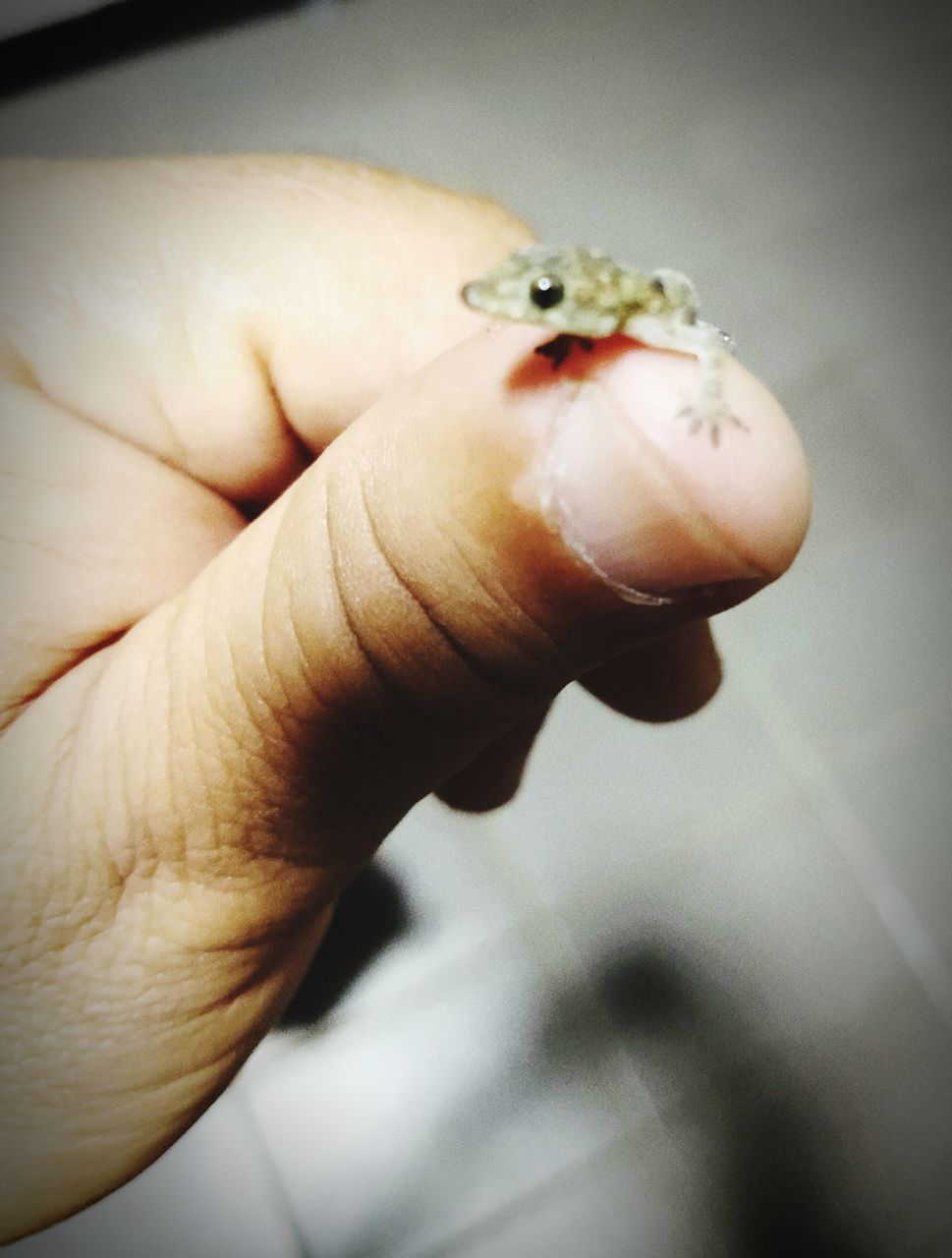 CLOSE-UP OF PERSON HAND HOLDING SMALL