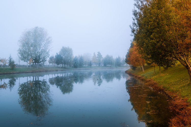 Nice reflection on the river in the fall. Tree Reflection Water Plant Tranquility Lake Tranquil Scene Beauty In Nature Scenics - Nature Nature Autumn Sky No People Waterfront Day Change Idyllic Non-urban Scene Growth Outdoors Fog Foggy EyeEm Gallery EyeEm Best Shots EyeEm Selects