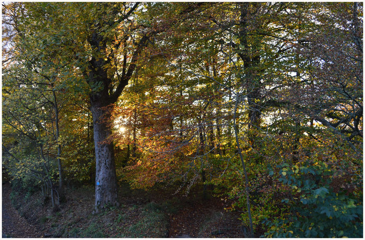 Tree Growth Nature Outdoors No People Beauty In Nature Branch Forest Sky Tree Trunk Backgrounds Countryside Rural Scene Textured  Leaves On The Ground Autumn Colors Country Life Beauty In Nature Scenics Lost In The Landscape Built Structure Kirriemuir Countryside Beauty Silhouettes Seasons