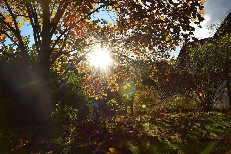 Tree Sunlight