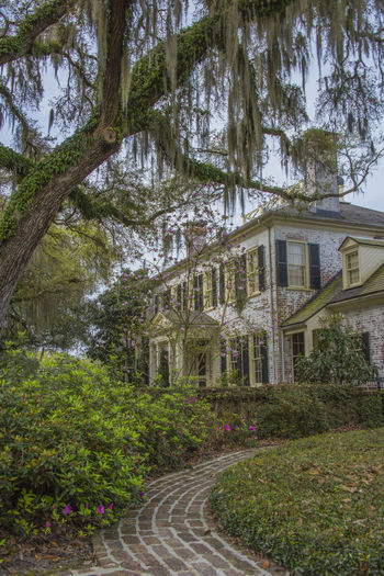 Architecture Architecture Brays Island Building Exterior City Day Garden Live Oak Nature No People Outdoors Plantation House South Carolina Southern Life Spanish Moss Travel Destinations Tree