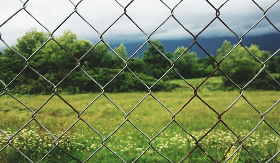 Chainlink Fence Security Protection Nature No People Outdoors Sky Day Before The Storm Cloudy Trees Plants Photography Open Edits EyeEm Nature Lover EyeEm Best Shots Taking Photos Light And Shadow Feeling Creative Close-up Green Leaves Freshness Green Color The Great Outdoors Tranquility