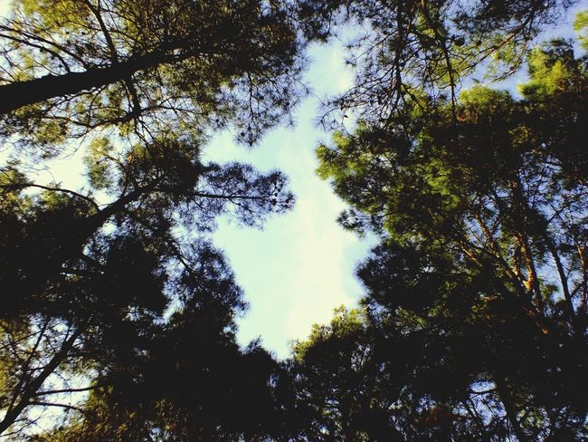Turkey Canakkale Enjoying The Sun Forest Travel