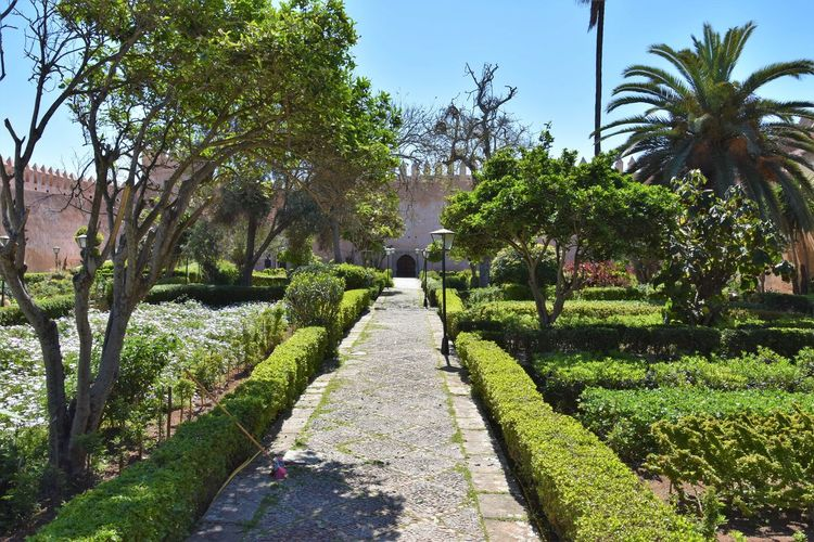 Morocco Rabat Beauty In Nature Day Diminishing Perspective Footpath Formal Garden Garden Garden Path Grass Green Color Growth Hedge Nature No People Outdoors Park Park - Man Made Space Plant Sunlight The Way Forward Tranquility Tree Treelined Tropical Climate