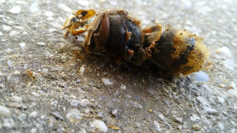 Insects eat a beeMaximum Closeness Bee Ant Ants Disgusting  Insect Outdoors Nature