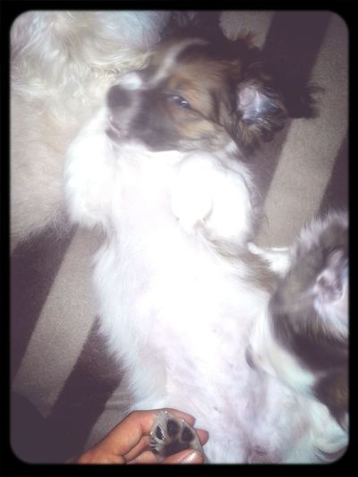 Let Me Sleep !! I Love My Dog <3 Puppy <3
