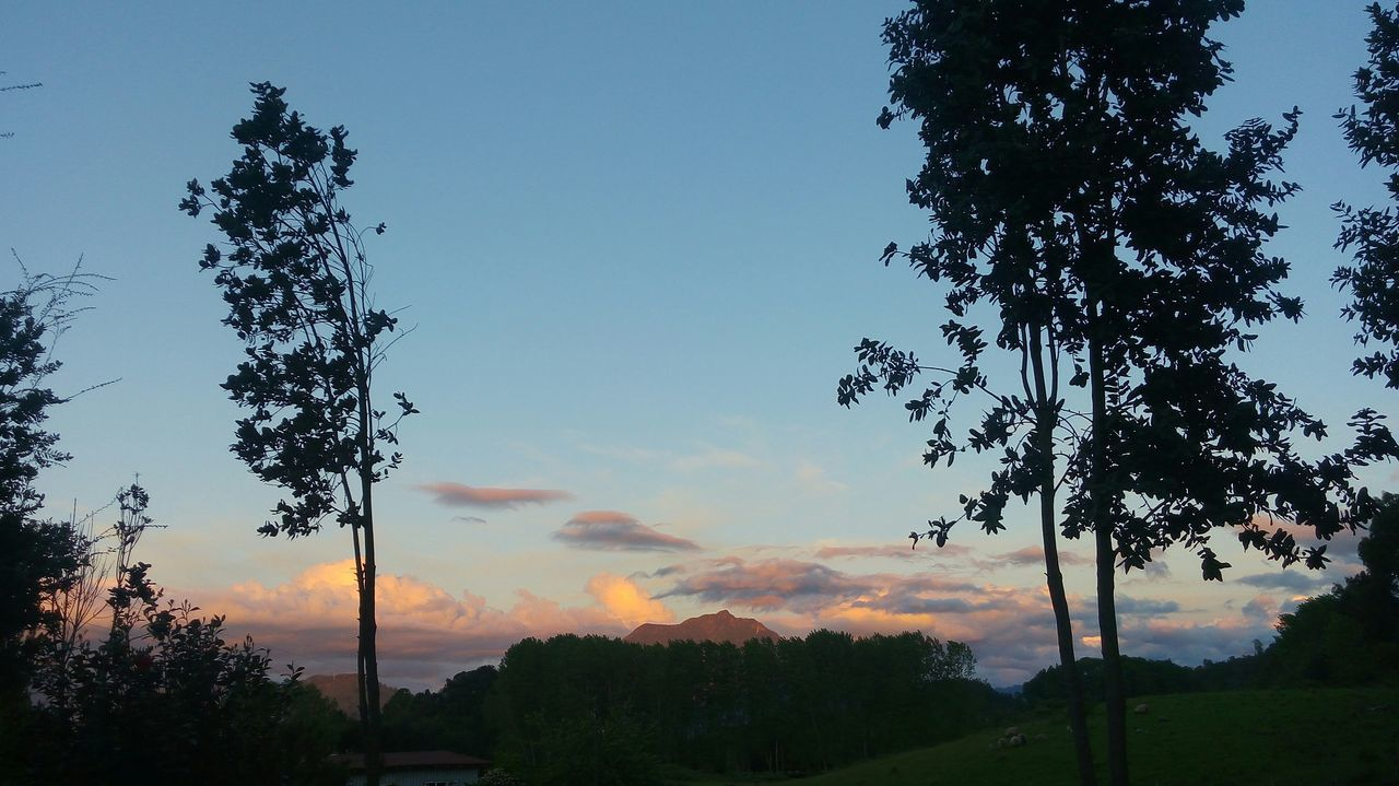 tree, nature, sky, tranquil scene, beauty in nature, growth, scenics, no people, tranquility, sunset, outdoors, tree trunk, landscape, silhouette, day