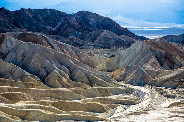 Dead Trees Death Valley Death Valley National Park Death Valley National Park Desert Landscape Road Trip Salt Lake Super Bloom Yellow Flower