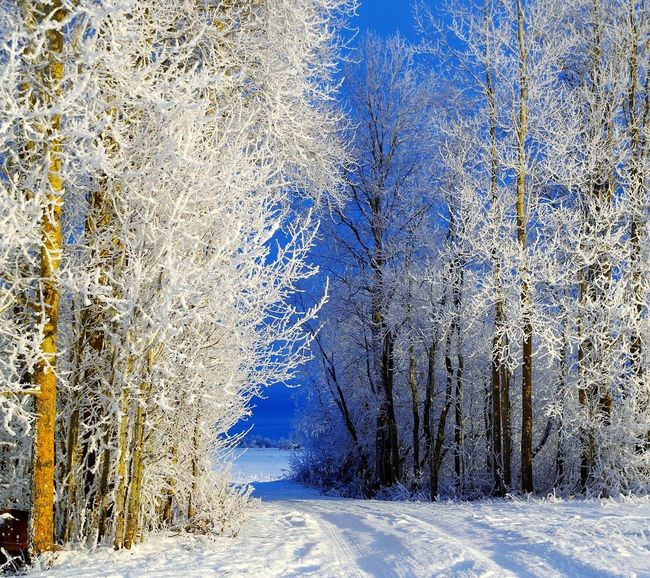 Winter Snow Tree Forest Blue No People Day Cold Temperature EyeEm EnjoytheNewNormal Headshot Photography Looking At Camera EyeEmPaid My Favorite Photo First Eyeem Photo EyeEm Best Shots EyeEmBestPics Eyeemphoto My Photography Popular Photos EyeEm Gallery Beauty In Nature Turkey Istanbul