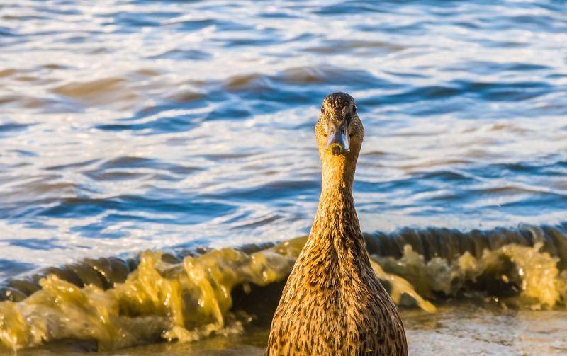 Close-up of bird in sea