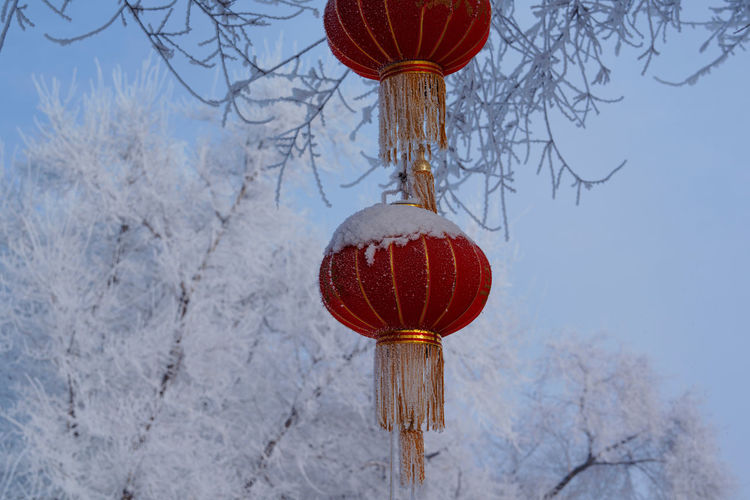 Low angle view of lanterns hanging on tree during winter