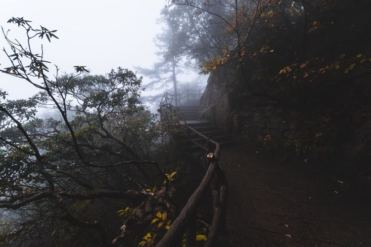 Misty and moody days climbing Mt Huangshan, China Eye Em Nature Lover Nature Nikon Nikon D750 Australian Photographers Beauty In Nature Branch Childhood Day Fog Forest Mist Moody Nature No People Outdoors Pattern Scenics Sky Tranquil Scene Tranquility Tree Week On Eyeem Yellow Shades Of Winter