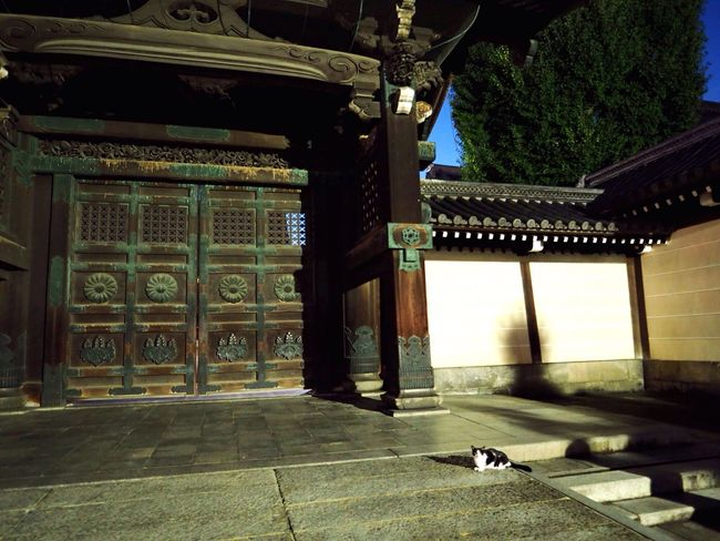Kyoto Japan Higashihonganji Temple Cat Night Gate Olympus PEN-F 京都 日本 東本願寺 寺 猫 夜 門前