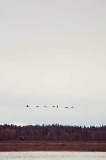 Flying Sky Group Of Animals Bird Copy Space Vertebrate Animal Themes Animals In The Wild Animal Nature Animal Wildlife Landscape Clear Sky Day Large Group Of Animals No People Plant Land Mid-air Tree