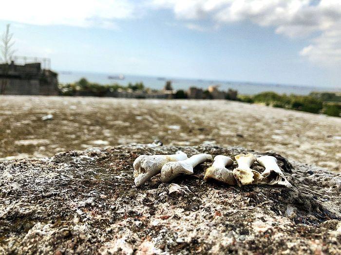 Bones View Rock