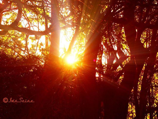 Sunrise Sunrise_sunsets_aroundworld FireNDaSky For The Love Of Trees ~