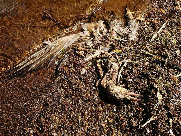 High Angle View Sand Day Outdoors No People Nature Beach Sunlight Close-up death life cycle