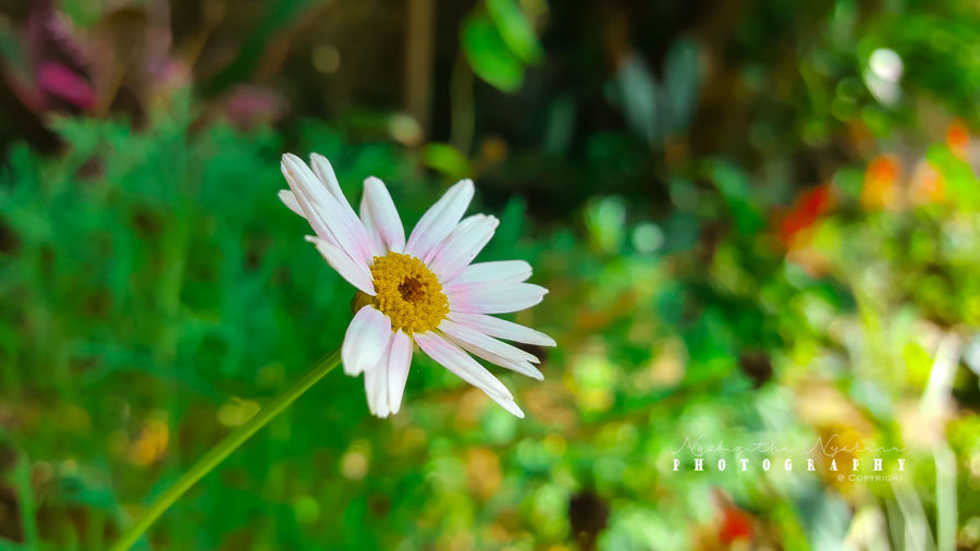 Flower Plant Freshness Beauty In Nature White Color Petal Close-up Nature