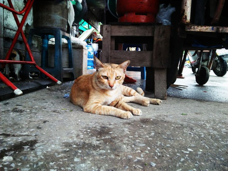 Domestic Cat Animal Themes Domestic Animals Pets One Animal Mammal Street Feline Sitting No People Day Cat Highcontrast Outdoors Phone Camera Phone Art