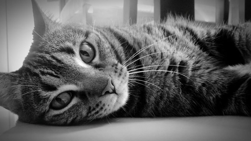Mycat♥ Cat♡ Relaxing Taking Photos Monochrome Black And White EyeEm Best Shots - Black + White