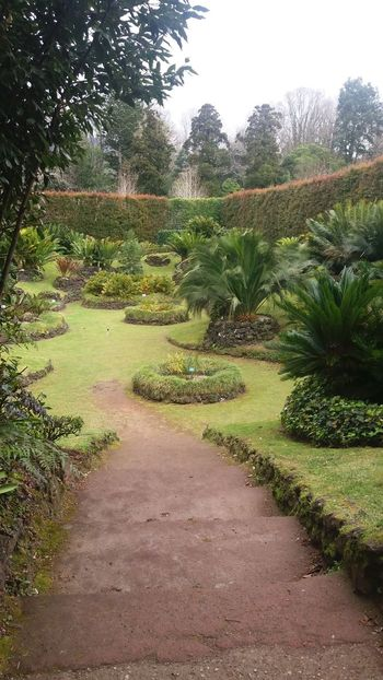 Nearby Furnas @ Azores (S. Miguel) Azores Azores Islands Azores Beauty Botanic Garden Excotic Furnas Furnas(Azoren) Azores, S. Miguel Beauty In Nature Botanic Day Field Garden Grass Green Color Growth Landscape Nature No People Outdoors Plant Scenics Sky The Way Forward Tranquil Scene Tranquility Tree