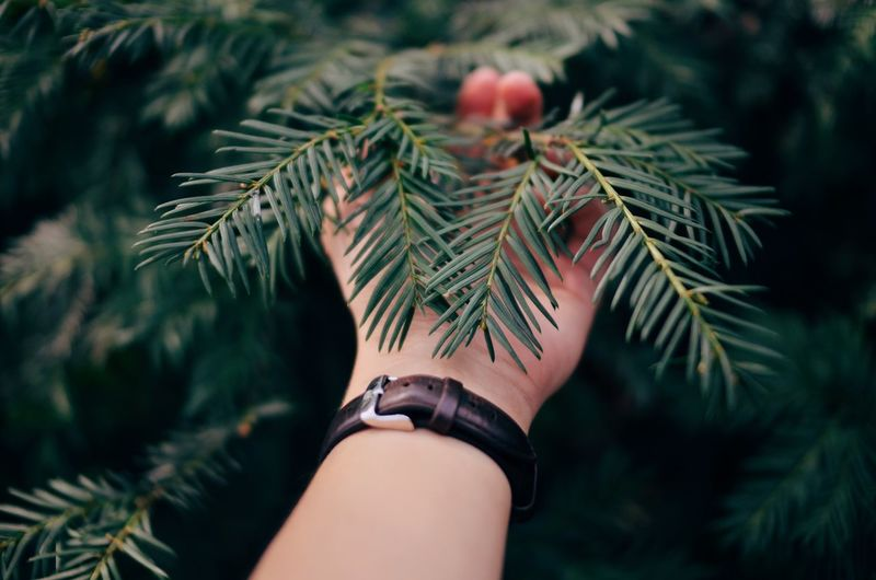 Close-up of hand on tree