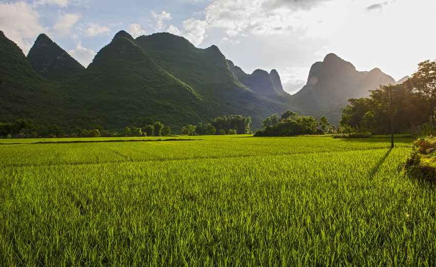 Scenic view of agricultural field against mountains
