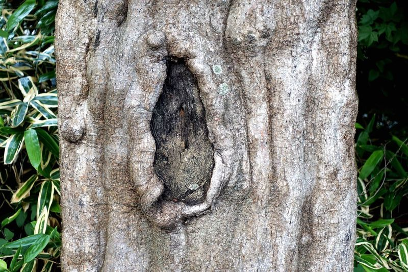 Close-up of hole on tree trunk