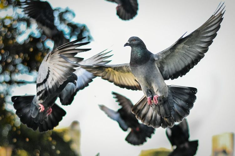 Frozen flight Flying Spread Wings Bird Animal Wing Animal Wildlife Mid-air Motion No People Outdoors Animal Themes Day Sky Pigeon Pigeons Graceful Durban Durban South Africa Durban Beachfront