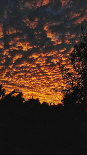 Photography Photo Photographer Vscocam Autumn Colors Sunsetlover Sunset Silhouettes Outdoors Sunset