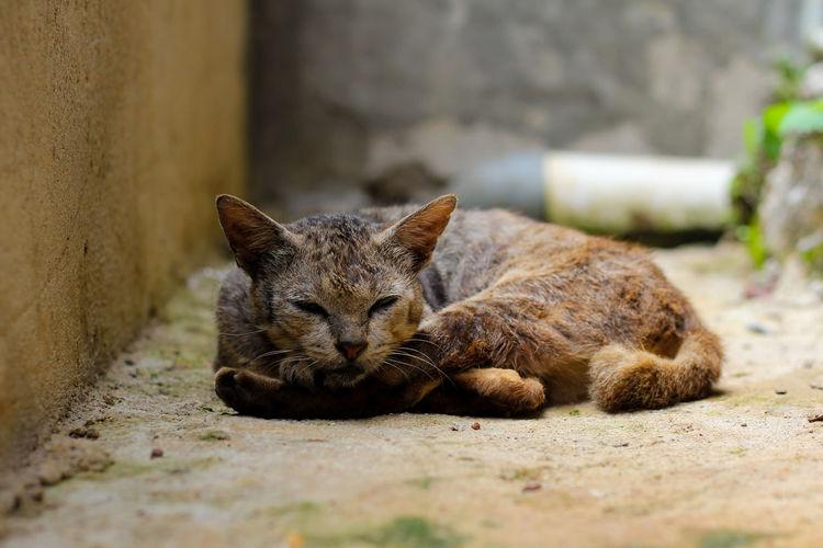 Portrait of a sleeping cat