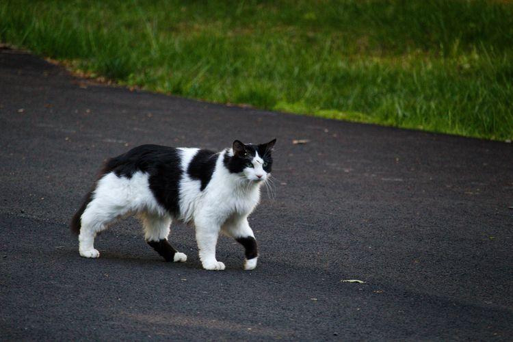 Cat looking away on road