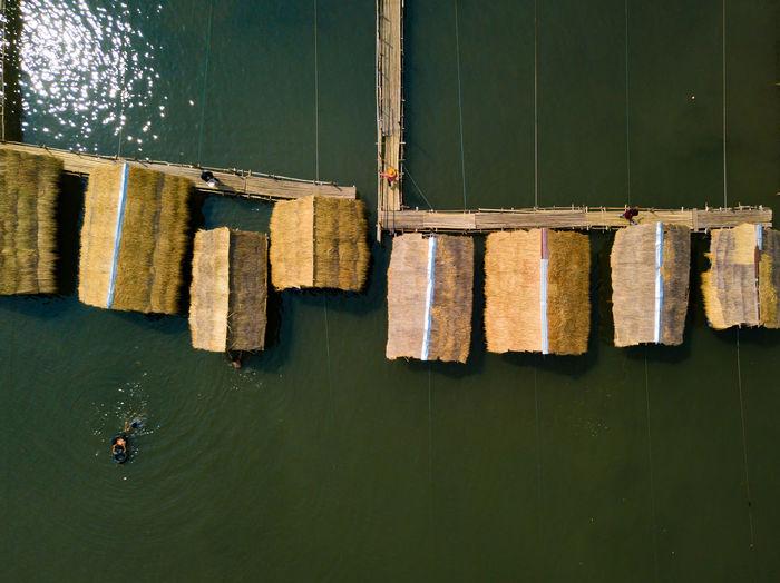 Scenery bamboo