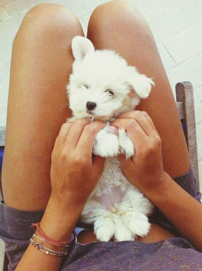 Dog Puppils Dog Love Cute Pets