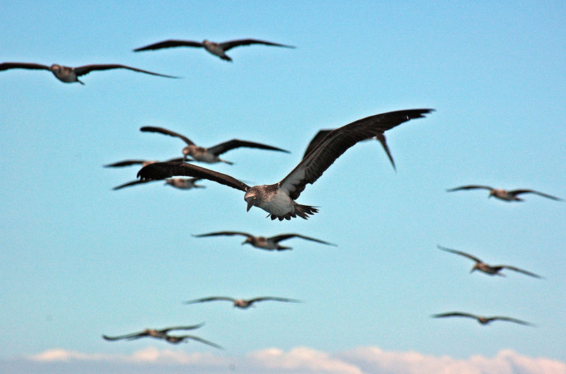 Low angle view of birds