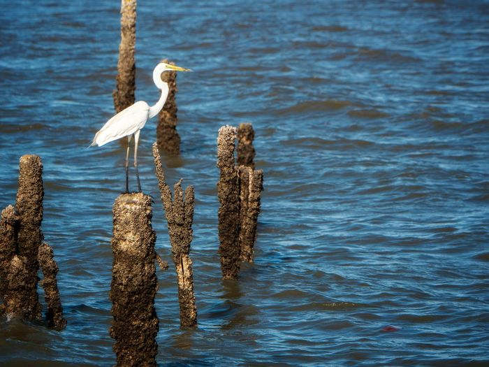 Bird perching on wooden post in sea