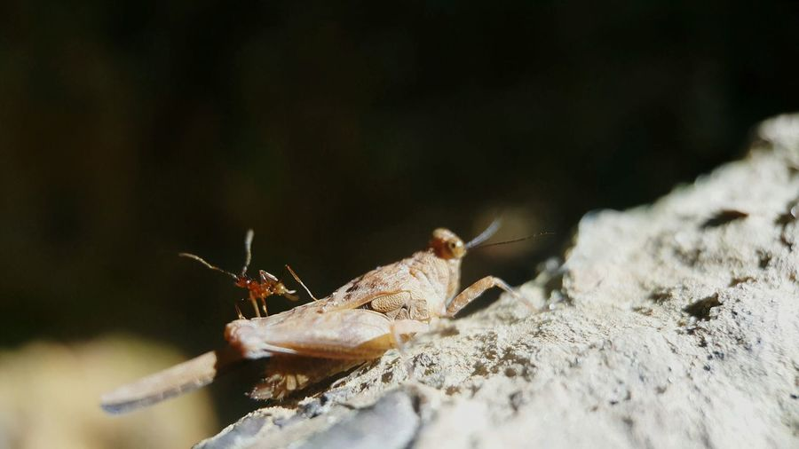 Close-up of grasshopper and ant on rock