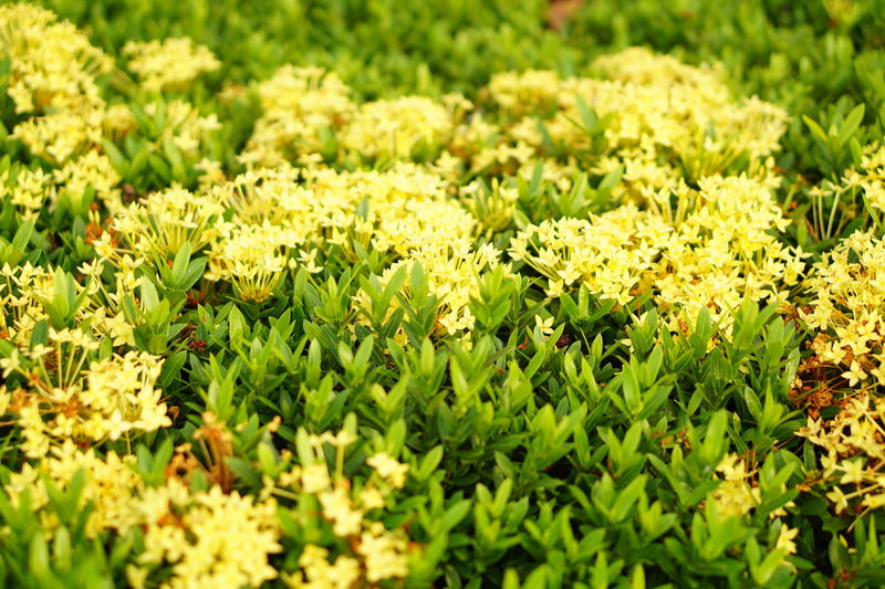Yellow spike flowers Nature Sunny Adventure Harmony Day Outdoors No People Yellow Yellow Flower Spike Flower Fragility Flower Plant Freshness Beauty In Nature Exploring Nature Nature Art Textured  Close-up Backgrounds Flower Head Pattern Green Leaves Tranquility Relaxing Moments